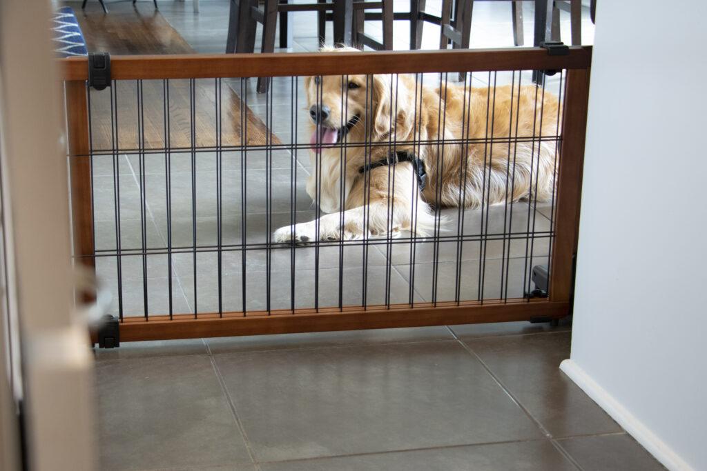 Golden retriever laying on floor behind a brown freestanding gate between door way leading into kitchen