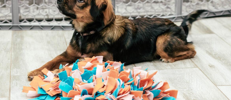DIY Dog Snuffle Mat