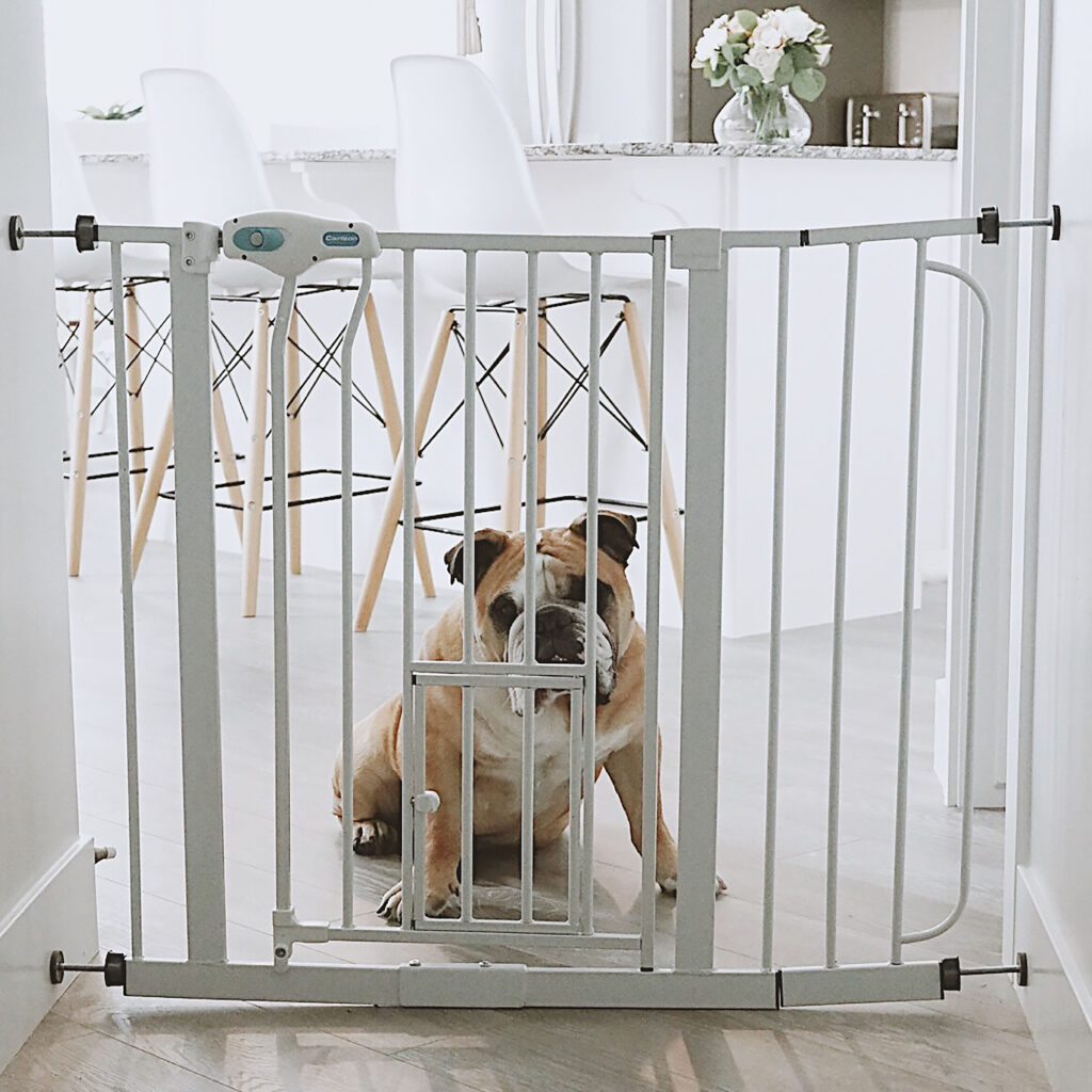 Bulldog sitting on other side of white pet gate between doorway.