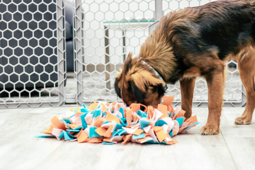 Black and brown dog with nose in a colorful snuffle mat on the ground sniffing for treats.