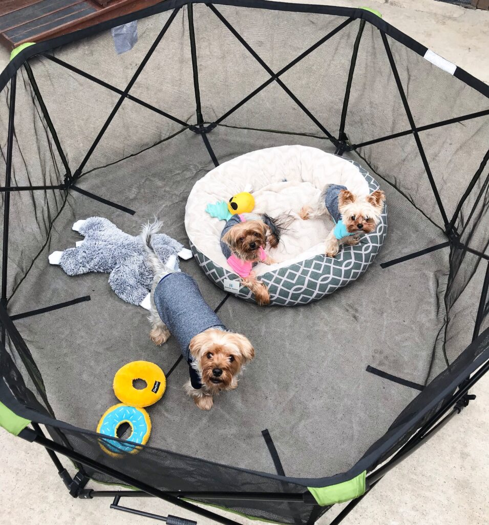 Three small dogs in a pet pen together with a small bed and some toys all looking up at the camera.