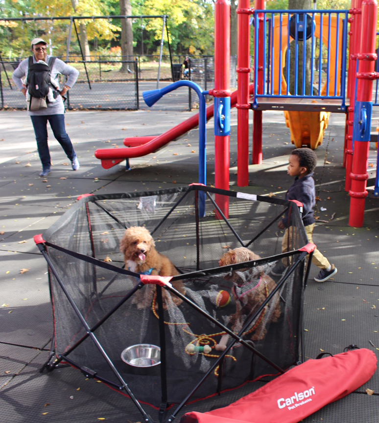photo of dogs in a pet pen at a play ground with children running around and a mom standing near them