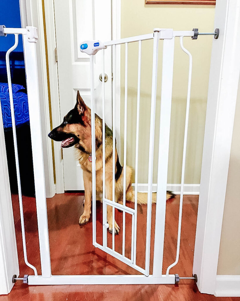 German sheperd sitting down behind a dog gate with the door open
