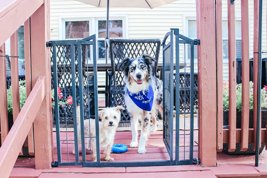 Two dogs standing on patio behind a pet gate looking through the door.