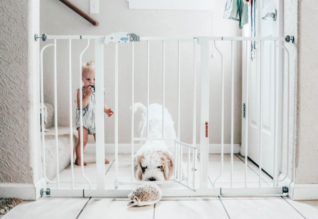 A pet gate set up between two walls near stairs and a dog and baby on one side and a hedgehog on the other