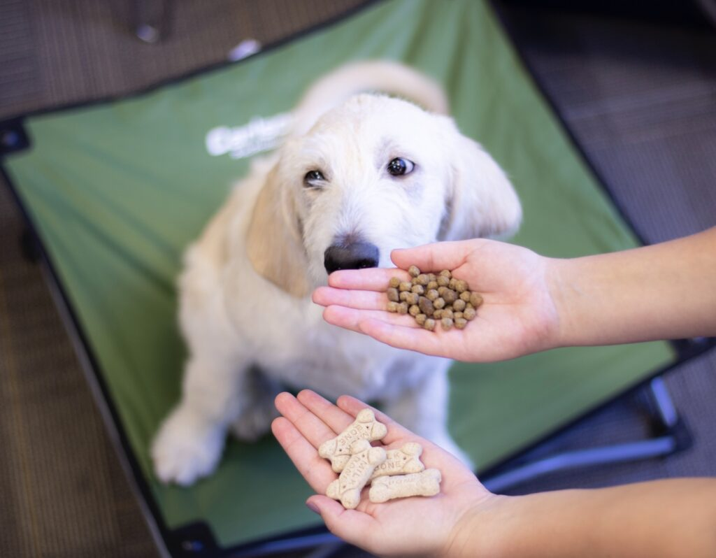 A puppy sitting on a cot with two hands offering different training treats that are eco friendly.