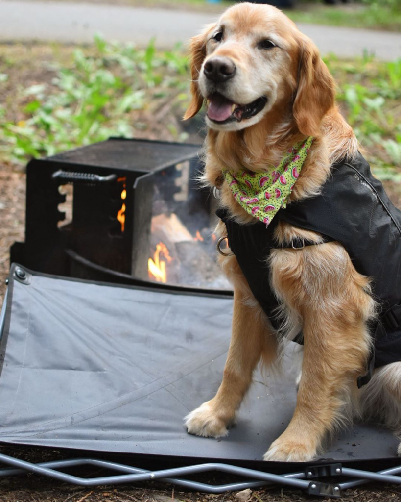 Dog sitting on dog cot in front of a camp fire with a bandana and eco friendly dog harness on.