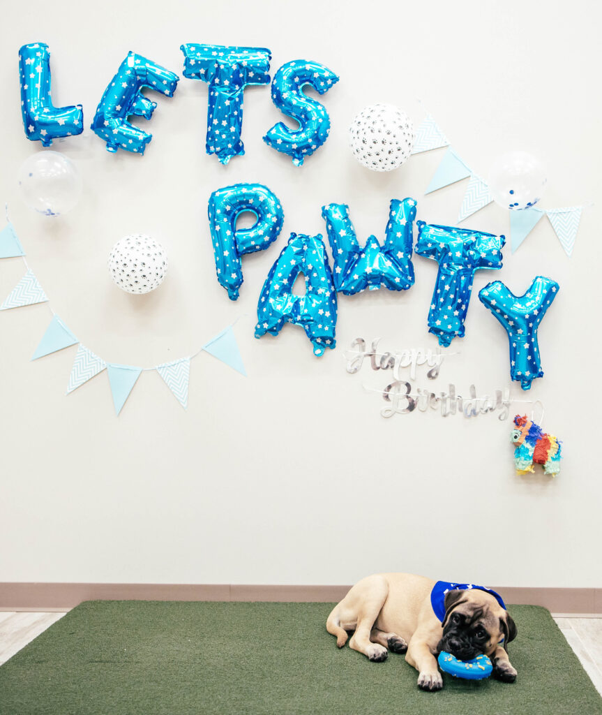 Lets Pawty balloons on the wall with pup sitting on fake grass chewing on toy and waiting for cake.