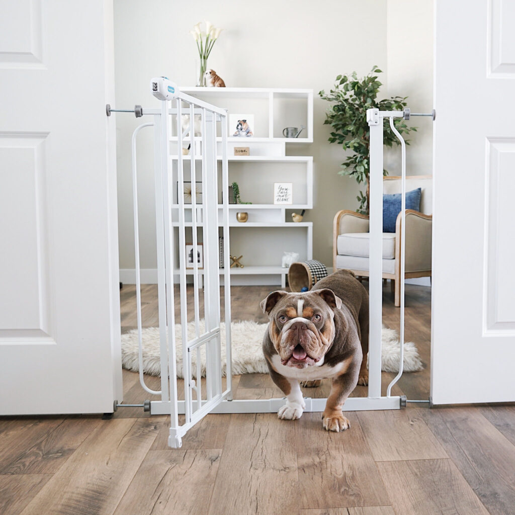 Pet standing in door way