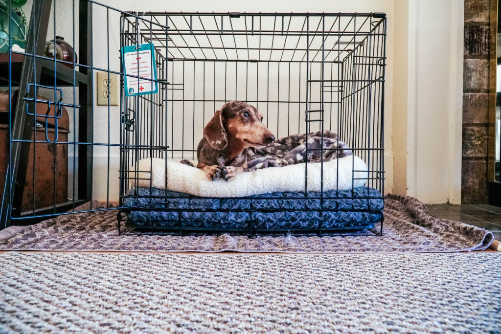 Dog in dog crate waiting to go home after being adopted.