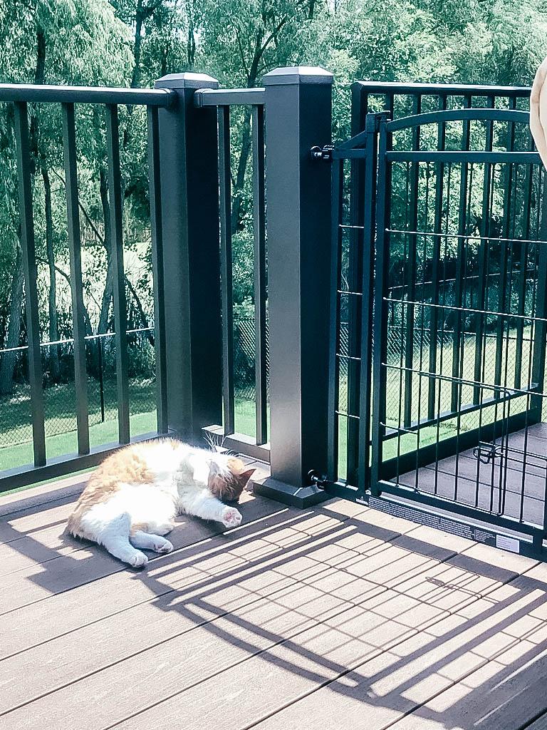 Cat on patio sunbathing near patio gate