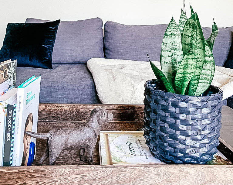 Photo of plant sitting on coffee table with dog decor on table and pet bed on couch in the background.