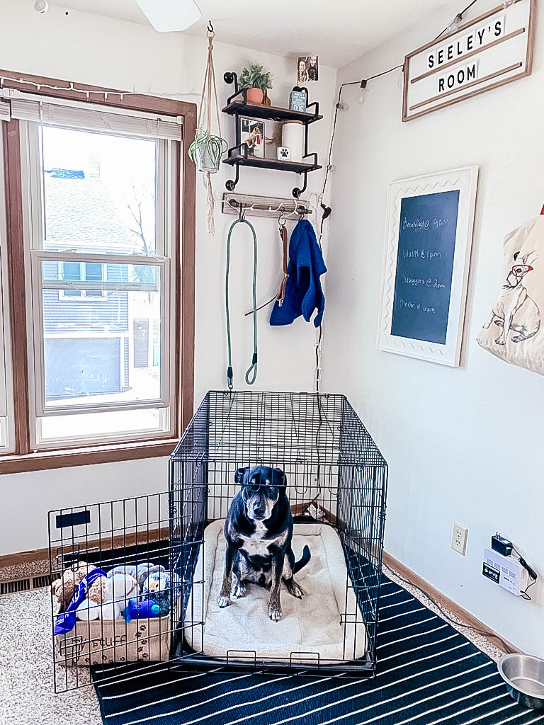 Dog sitting in kennel in his own area in the house with his toys and bed and dog decor.