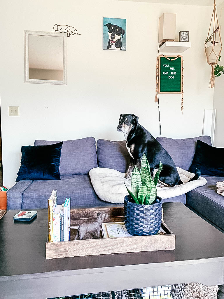 Dog sitting on couch and pet bed with dog painting on wall behind him and dog decor