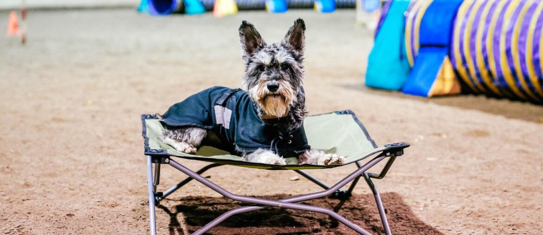 Top 5 pet training accounts