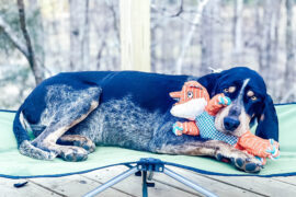 dog on raised dog bed with toy