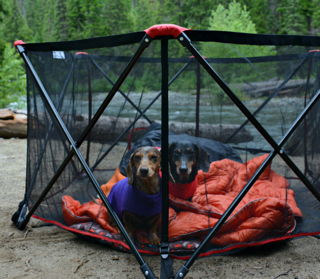 Two small dogs in a pet pen with a blanket while camping outdoors