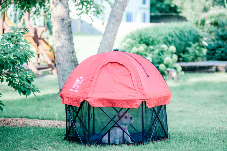 Small dog in pet pen outdoors