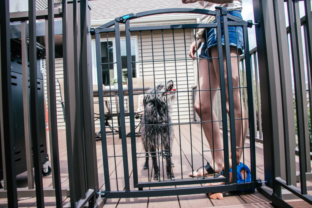 Dog standing at pet gate waiting to be let out after training on aggressive or reactive to other dogs commands from human