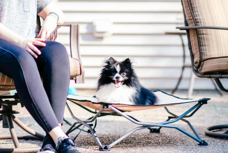 small dog on dog cot